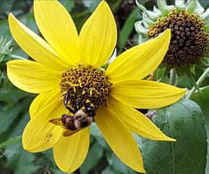 bee, flower, and flora image