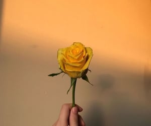 rose, yellow, and aesthetic image