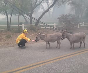 animals, fires, and rescue image
