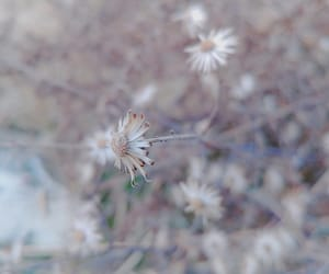 flower, tiny, and nature image
