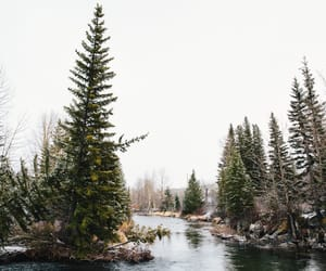 trees, nature, and river image