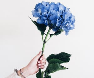 blue, flower, and tumblr image