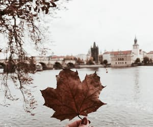 autumn, czech republic, and fall image
