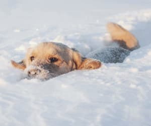 winter, dog, and puppy image