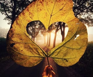 autumn, trees, and heart image