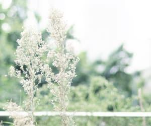flora, jade, and light image