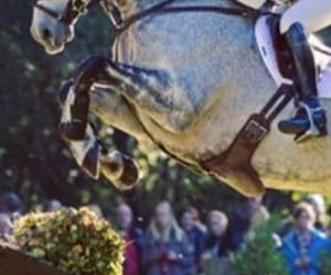 equestrian, jump, and ride image