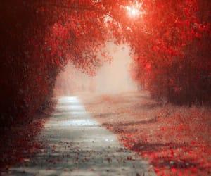 autumn, foliage, and leaves image