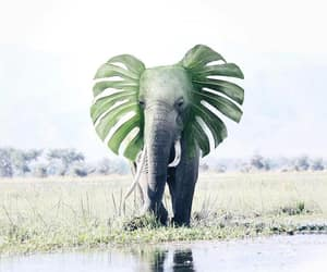 elephant and savage image