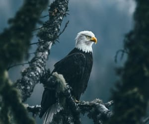 animal, eagle, and nature image