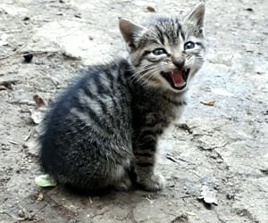 adorable, cat, and cuteness image