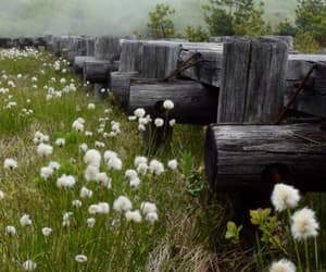 dandelions, grass, and hike image