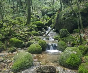 green, hike, and moss image