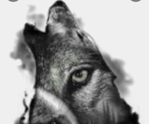 animal, Howl, and wolf howl image