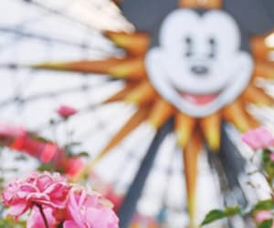 disney world, flowers, and magic image