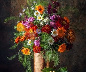 autumn colors, colorful, and thanksgiving image