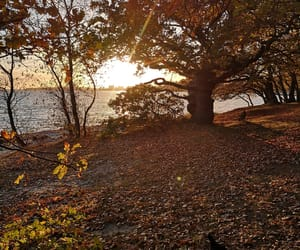 autumn, sunset, and calm image