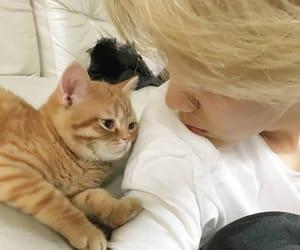 cat, bangtan sonyeondan, and k-pop image