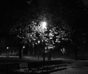 black and white, leaves, and night image