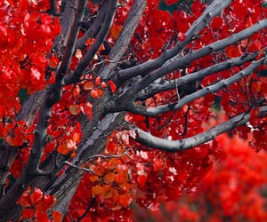 autumn colors, red, and fall foliage image