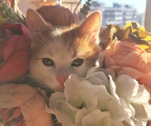 cat, flowers, and home image