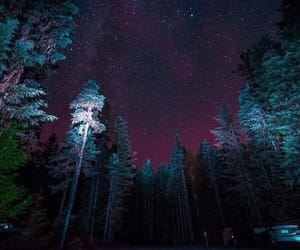 calm, night, and trees image