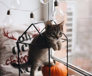 autumn, cat, and cozy image