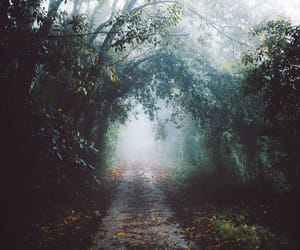 fog, forest, and landscape image