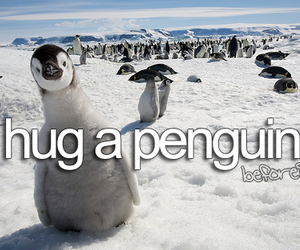 penguin, hug, and before i die image