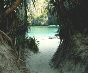 beach, summer, and nature image