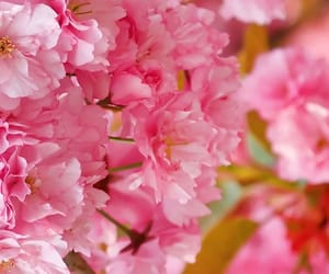 background, flower, and for image