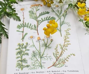 botany, plants, and yellow image