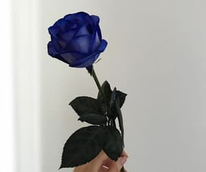 beautiful, blue rose, and flower image
