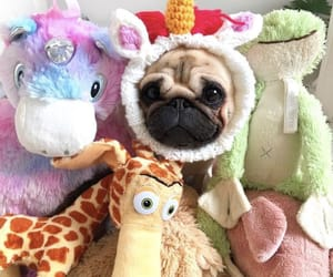 One Click With My Buddies 🦒🦄🐷🐻🐶