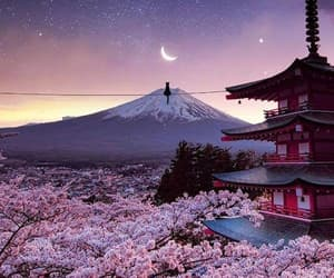 cat, japan, and moon image