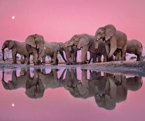 animals, elephants, and pink image