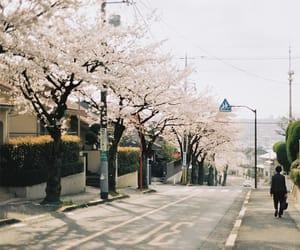 japan, street, and japanese image