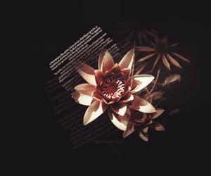 black, dark, and flower image