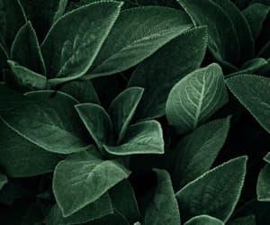 dark, leaf, and shadow image