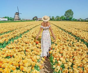 flowers, garden, and holland image