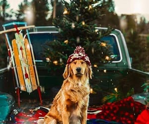 christmas, dog, and winter image