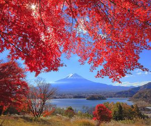 fall, nature, and landscape image