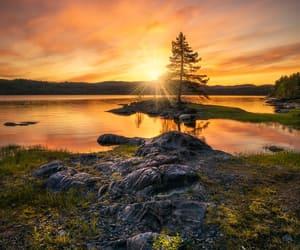 Sunset over solitary tree by Ole Henrik Skjelstad
