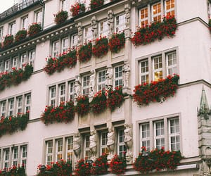 flowers, building, and vintage image