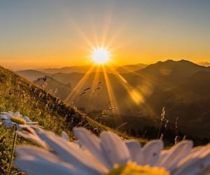 flower, nature, and sun image