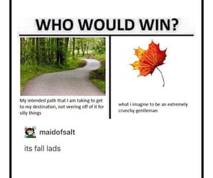 autumn, fall, and funny image