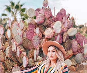 cactus, colorful, and fashion image