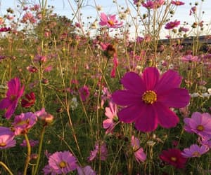 cosmos, life, and flowers image