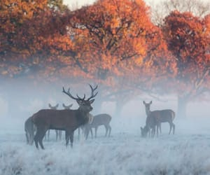 animals, coffee, and fall image