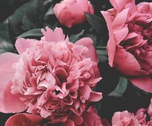 Image by Anastasia♡